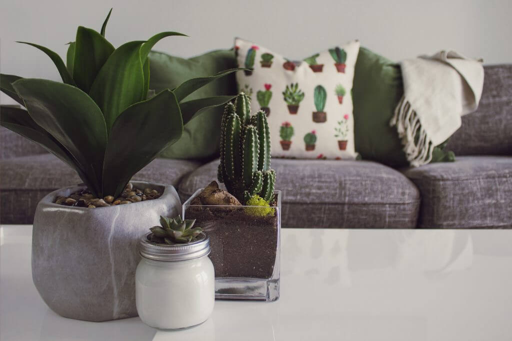3 potted indoor plants on a table in front of a couch with cushions