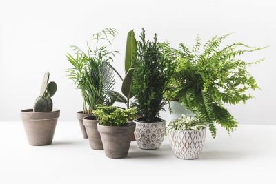 Fabulous Houseplants